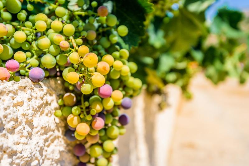 Weingüter auf Kos