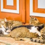 tierschutz-kos-katzen