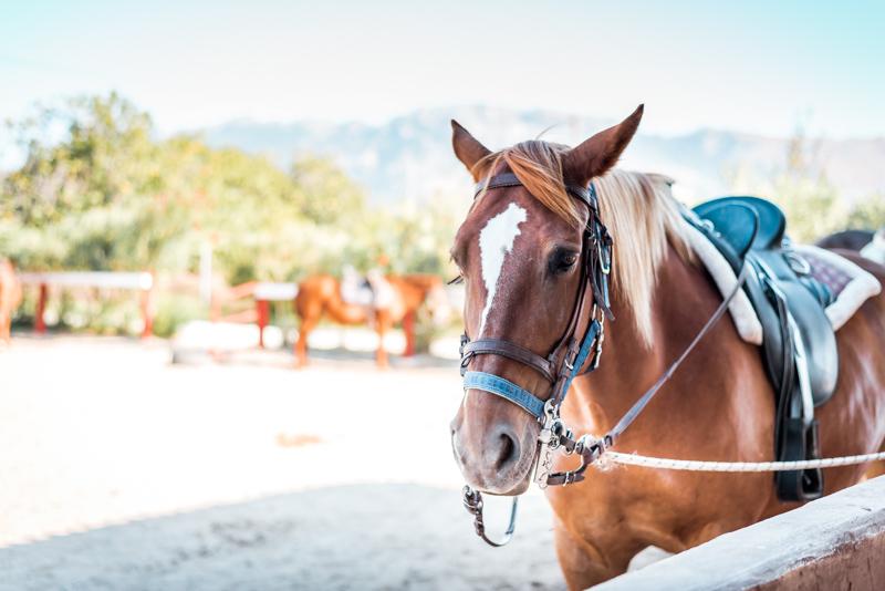 Erikas Horse Farm Kos Reiten